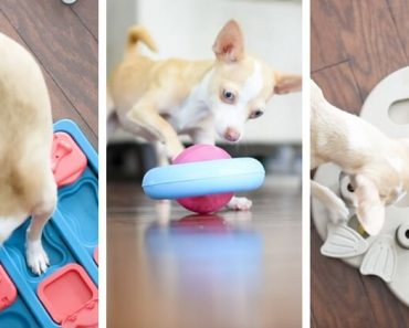 One of the best ways to beat doggy boredom? Interactive dog toys and puzzles! Find out my three favorite dog games (the ones my pups personally play with on a daily basis). Plus, watch my video to see the interactive toys in action!