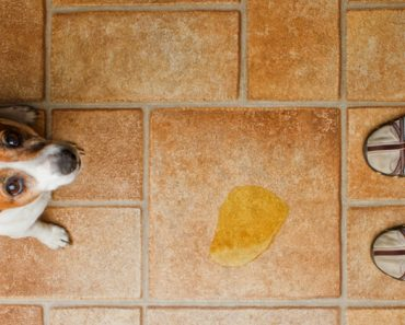 One of the most frustrating things for pet parents is finding a surprise puddle from little Fido on the floor. Read on for seven common reasons your dog may be peeing in the house. Plus, what you can do to prevent it.
