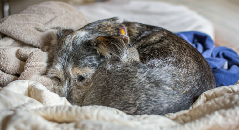 While any sleeping pooch is awe-worthy, did you know that your dog's sleeping position actually says a lot about his personality? Read on as we decode a few popular positions!