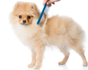 Tangles, knots, and mats ... oh my! If you're raising a medium or long-haired pooch then chances are you've dealt with knots before. Here are some grooming tips to help you gently demat your dog's tangled coat.