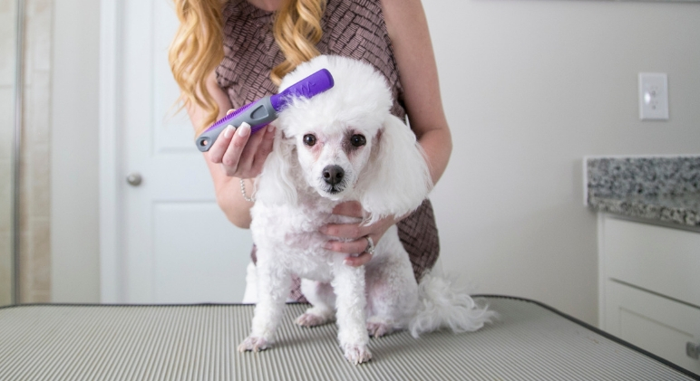 Tangles, knots, and mats ... oh my! If you're raising a medium or long-haired pooch then chances are you've dealt with knots before. Here are some grooming tips to help you gently dematyour dog's tangled coat.