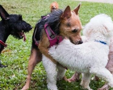 It's a behavior that makes dog parents either uncomfortable, embarrassed, confused, or a little entertained. Whatever your reaction, find out why dogs hump!