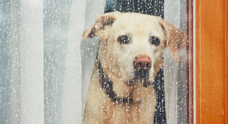 Hurricanes, floods, tornadoes, wildfires — devastation comes in many forms. Here are tips to help you and your pet stay safe during a hurricane.