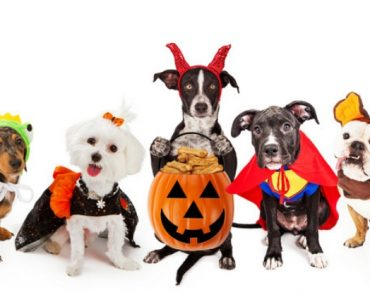As the countdown to Halloween begins, are you looking for some great dog costume inspo? Check out this list of dog Halloween costumes that fit all sizes!