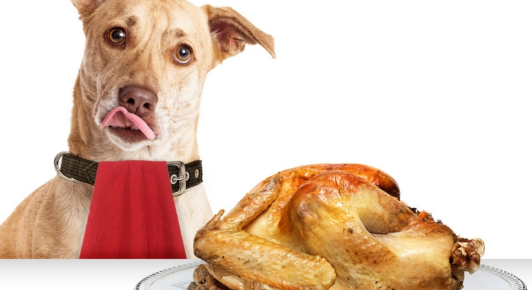 The countdown to turkey begins! Before you share your favorite Thanksgiving foods with your dog, find out which food made the no-no list and why.