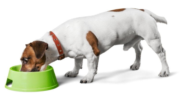 Recall Alert Dry Dog Food Recalled Over Dangerous Levels Of Vitamin D