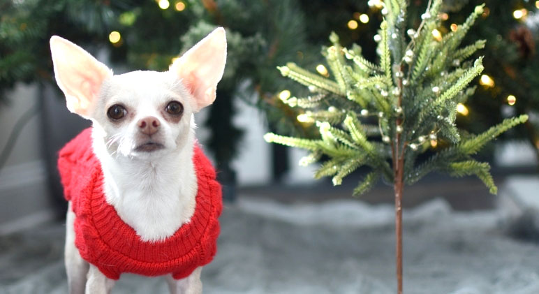 The items on this list are a few of my favorites from this year and years past. They will make great Christmas gifts for the dog lovers in your life!
