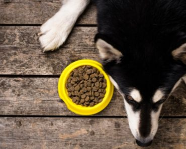Two more pet food manufacturers issue recalls due to potentially elevated vitamin D levels. Find out the latest foods to watch for.