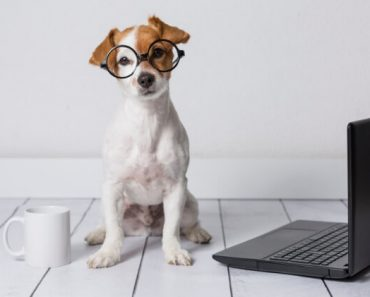 With so much info online, it's not always easy to know which is reliable. That's why I've compiled a list of 10 websites that all dog parents can trust!