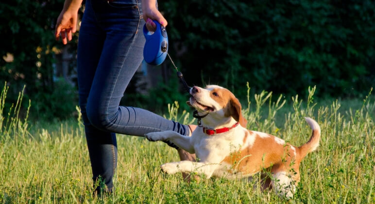 The retractable leash - it cause a pretty hot debate amongst dog parents. Some love the freedom they offer while others say they're downright dangerous.