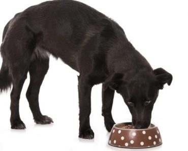 Hill's Pet Nutrition voluntary recalls select canned dog foods due to potentially elevated vitamin D levels. Find out which foods to watch for.