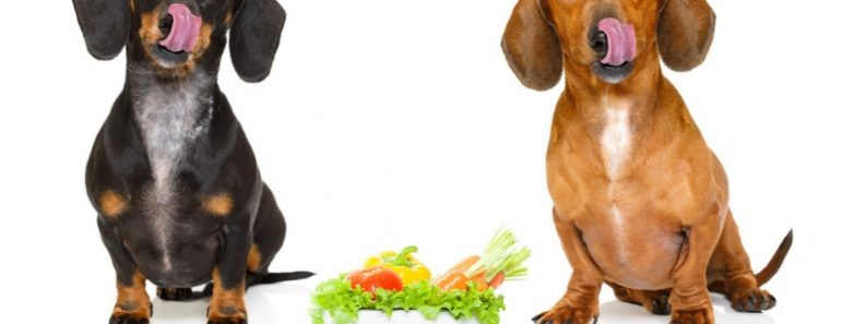 Adding certain fresh foods to our dog's diet can have a huge impact on their health! Check out 8 green veggies that dogs can eat (plus, how to serve them)!