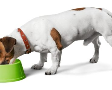The Food and Drug Administration (FDA) has issued a warning for pet parents to stop feeding 3 lots of Darwin's Natural Pet Products raw dog food.