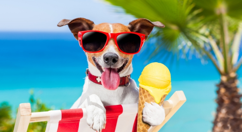 While we plan our fun in the sun, we also have to plan for ways to keep us refreshed. Read on for 6 essentials to keep your dog cool this summer!