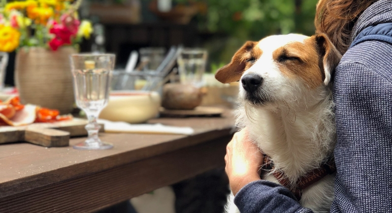 Next time you take a road ride with your pooch, consider making a pit stop at these dog-friendly restaurants. He'll definitely love the special treat!