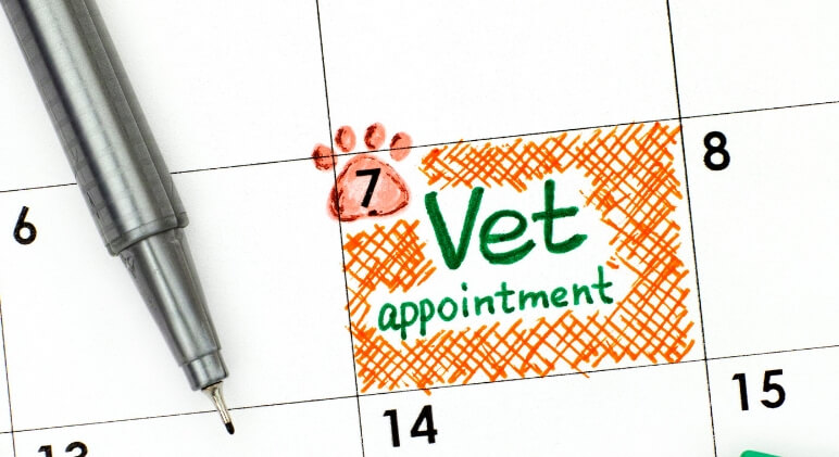 Dog vaccines and surgeries: This scheduling advice is the result of a vet visit gone wrong. My hope? To help you avoid this easily avoidable mistake!