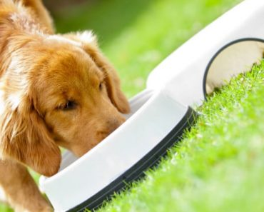 The FDA urges dog parents to stop feeding all Performance Dog frozen raw pet food after samples tested positive for Salmonella and Listeria monocytogenes.
