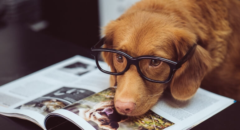 If man's best friend is your best friend then you may want to get your paws on a copy of one of these books! Check out our must-read list for dog-lovers!