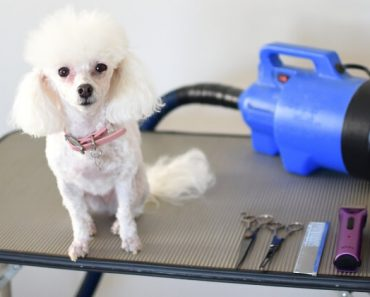 Are you considering grooming your dog at home? I've rounded up my go-to grooming tools that I've used for years. Let this list serve as your starter guide!