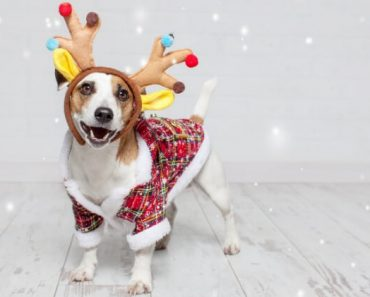 As the countdown to Christmas begins, are you planning on taking family holiday photos? If so, here are some fun, festive accessories for your dog!