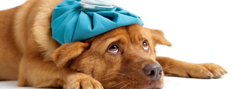 If you go for annual vet checks & keep your dog up-to-date on shots then you've probably heard about Canine Parvovirus. But, do you really know what is it?