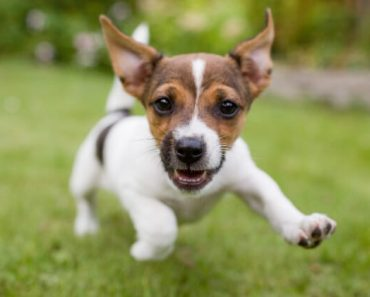 If you were a dog, what breed would you be? The quiz below is filled with a few fun personality questions, which will reveal your puppy persona!