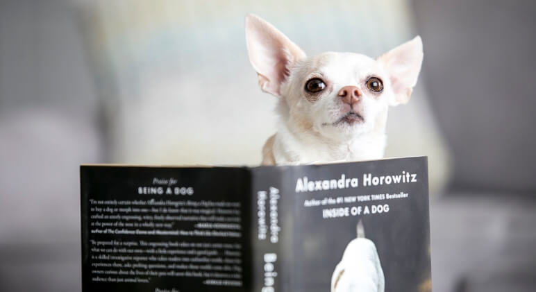 Love curling up on the couch with a good book? Well, I've got just the selection for you. These books about dogs are perfect for any puppy lover!