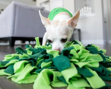 A snuffle mat is a popular nose work, brain game for dogs. Find out the many benefits. Plus, watch the tutorial to find out how you can make one at home!