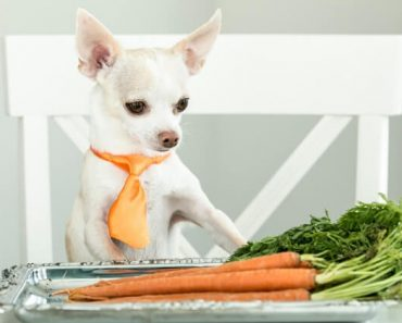 Loaded with antioxidants, fiber, vitamins, and minerals, carrots are a great addition to diet. But, can dogs eat carrots too? Find out!