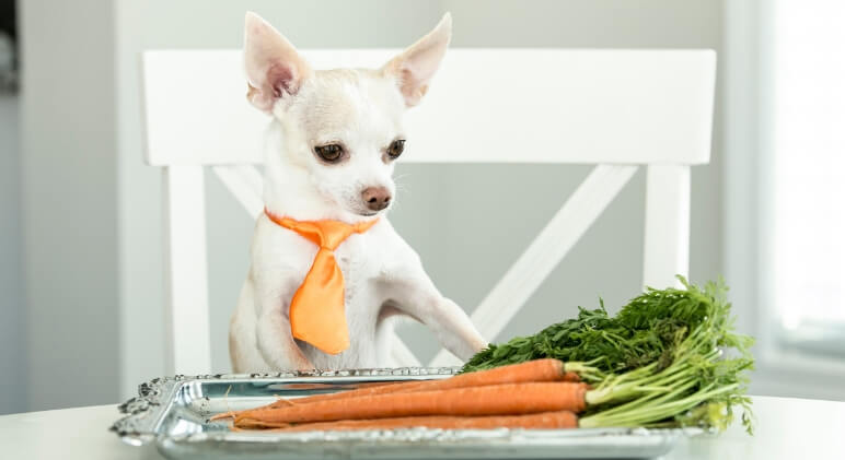 Food Facts: Can Dogs Eat Carrots