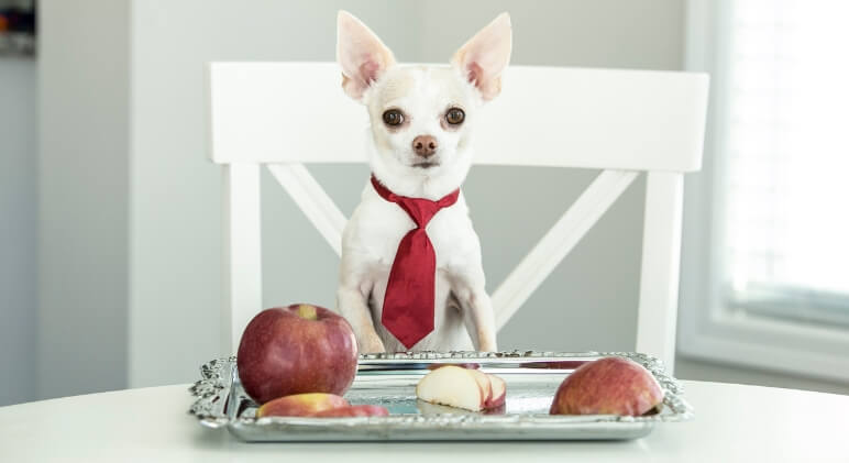 Will an apple a day keep the doggy doctor away? Find out the many health benefits of apples for dogs. Plus, proper feeding tips!