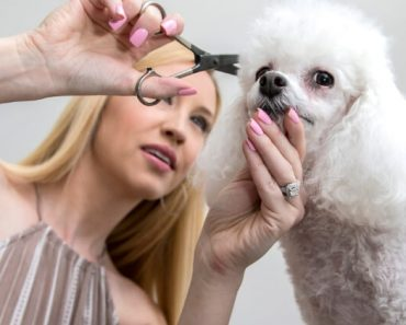 Looking to give your pooch a haircut? Before you bust out the buzzers, check out this basic dog grooming tutorial for useful tips and techniques.
