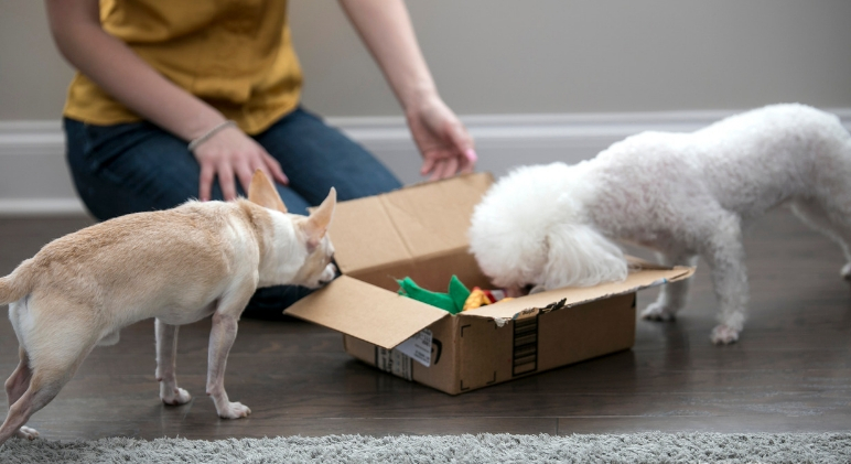 Looking for an easy way to mentally stimulate your pooch? Check out this DIY busy box dog toy. It takes a few minutes to throw together and dogs love it!