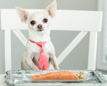 Sure, there are plenty of fish in the sea. But, salmon sure makes for a great option! Find out the benefits of salmon for dogs. Plus, feeding tips!