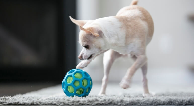 We just got a cool new dog toy that I can't wait to share with you! It's called a Hol-EE Roller and it's a flexible rubber ball that features lots of holes.