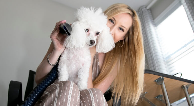 When it comes to grooming, how does your dog handle the blow dryer? The loud noise and extreme air blasts can be scary. Follow these desensitizing steps!