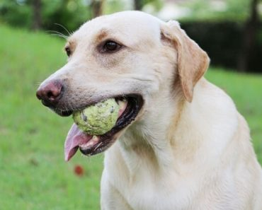 Really, any small object that Fido can fit inside his mouth is a potential choking hazard. But the 10 things on this list are considered the most common choking hazards to our canine companions.