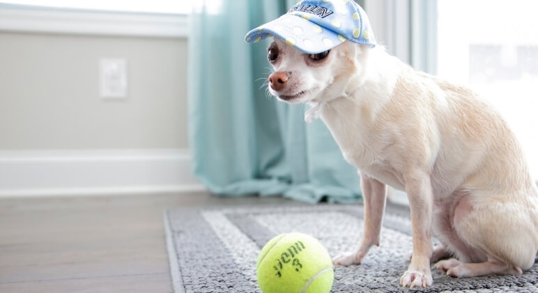 Tennis balls are one of the most loved dog toys of all time. Just one throw and dogs immediately run after it with pure joy. But are they safe? Find out!