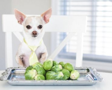 Have you ever wondered: Can dogs eat Brussels sprouts? Short answer: Yes! Read on for nutritional facts, benefits, and important feeding tips for dogs.