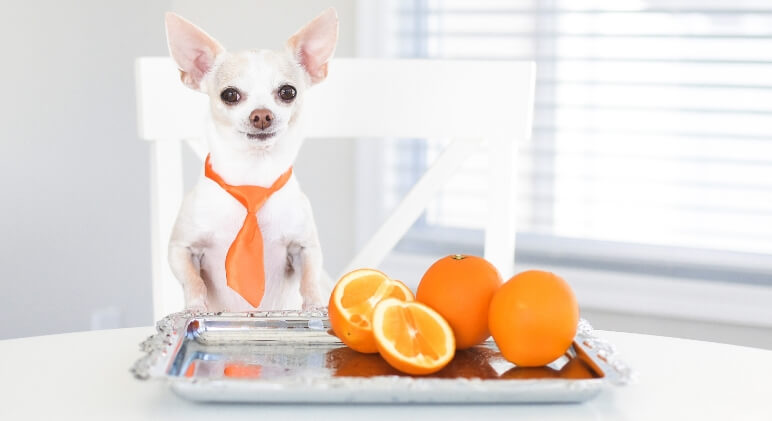 Sweet yet tangy, juicy, and refreshing -- it's easy to understand why oranges are so popular. While most people love them, can dogs eat oranges? Find out!