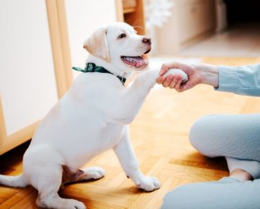 "Welcoming a new puppy into your home? The first 24 hours can be ""ruff"". Here is our best advice to help you survive the upcoming challenges thrown your way!"