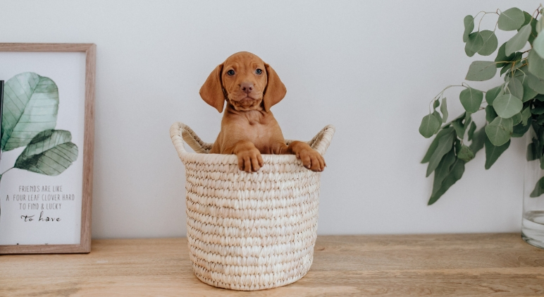 Welcoming a puppy into your home is always exciting. Make sure they're in a safe environment by following these simple tips to puppy proof your home.