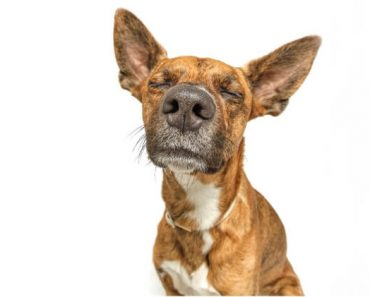 """""""Why does my dog stink?"""" If you notice a stench coming from your canine companion then it's important to figure out what it is. See 6 common reasons."""