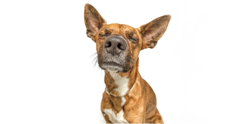 """Why does my dog stink?"" If you notice a stench coming from your canine companion then it's important to figure out what it is. See 6 common reasons."