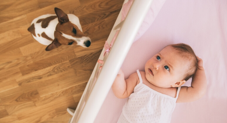You're already a great dog mom - now you're expanding your family once again. Read on as a dog trainer shares tips for preparing your dog for the new baby.