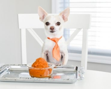 While we may love indulging in festive flavored goodies, can dogs eat pumpkin? Short answer: Yes, when served correctly!
