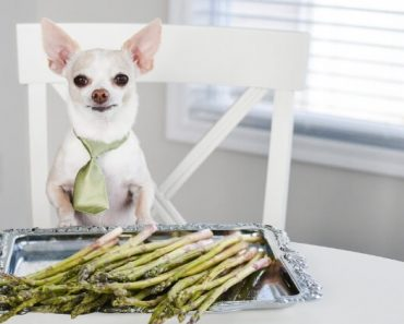 Not only is asparagus filled with flavor, but it's also loaded with nutrients. Today, we're answering the question: Can dogs eat asparagus too?