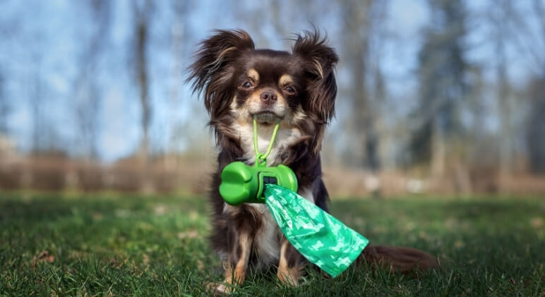 Since your dog's poop offers a window into their overall health and wellbeing, it's essential to know what's normal and if something is off.