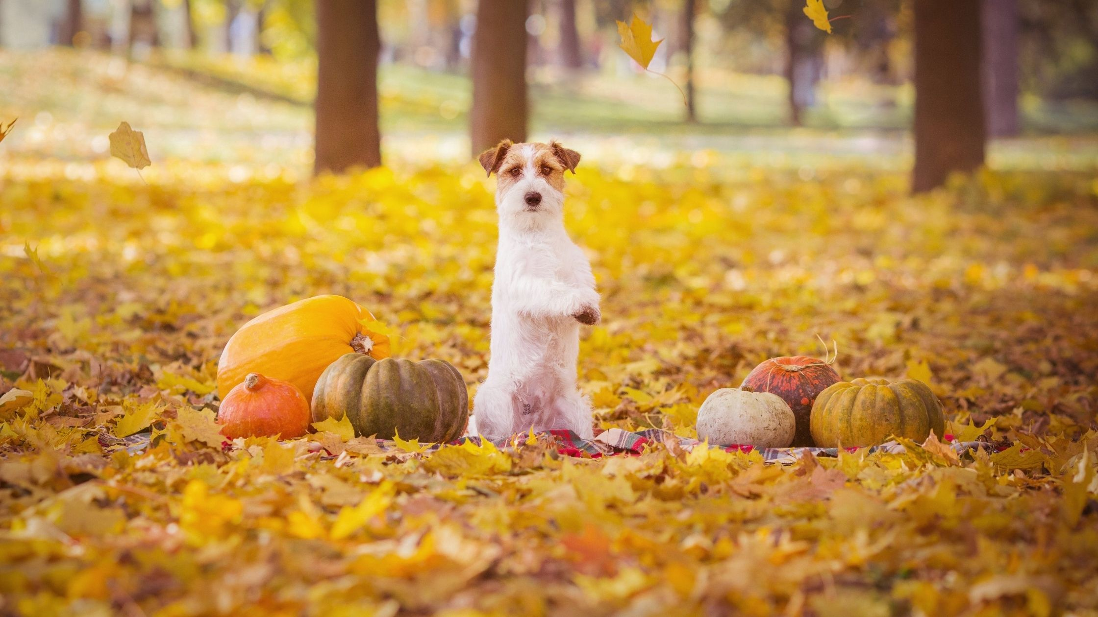 As you plan your seasonal activities, don't forget to include Fido! Read on for 11 fun fall activities you can enjoy with your dog.